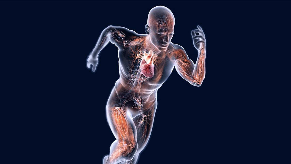 Prevenzione cardiovascolare Alimentazione, Salute e Benessere
